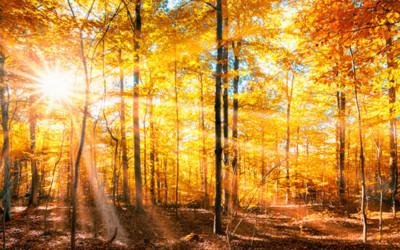Sonnenstrahlen scheinen durch einen Herbstwald