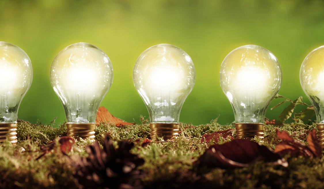 Mehrere leuchtende Glühlampen stecken im Waldboden.