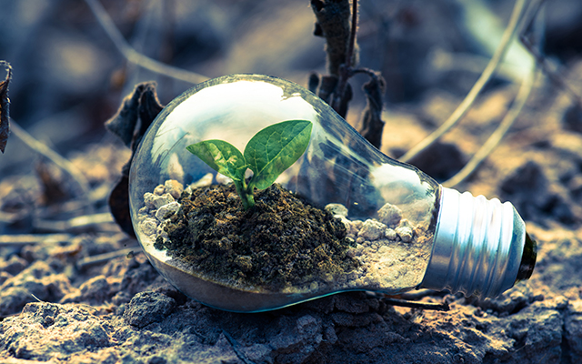 Glühbirne auf sandigem Boden liegend. In der Birne ist Erde mit einer Pflanze zu sehen
