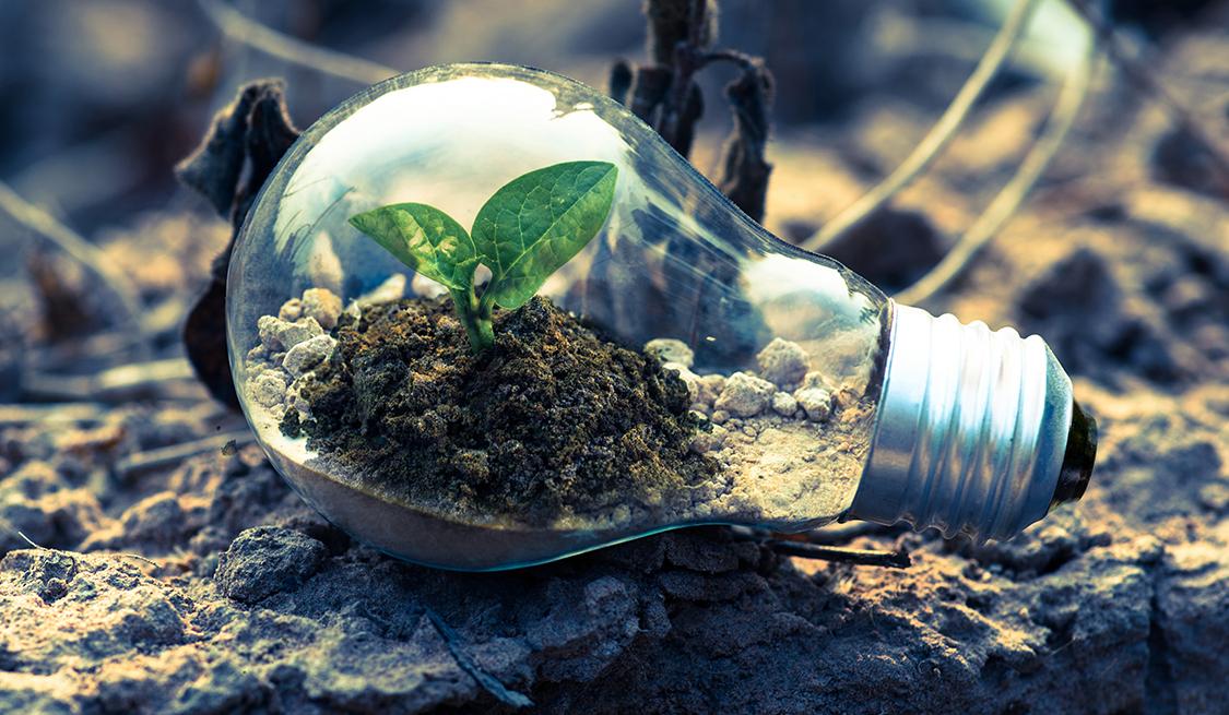 Glühbirne auf sandigem Boden liegend. In der Birne wächst eine kleine Pflanze